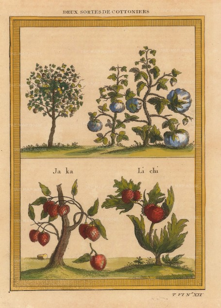 Bellin: Cotton, Jackfruit, Lychee. 1749. A hand-coloured original antique copper-engraving. 6 x 8 inches. [NATHISp7135]