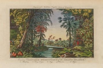 Middleton: Vegetable Production in Asia. 1778. A hand-coloured original antique copper-engraving. [NATHISp7138] SOLD