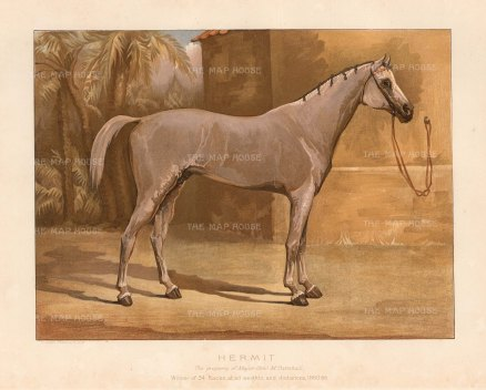 RARE: Hermit. Grey Arabian Stallion, exemplar of the breed brought to England by Maj General and Mrs Turnbull. After a portrait by James Clark.