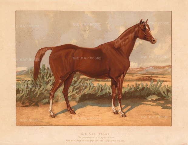 RARE: Shah Rukh. Chestnut Arabian Stallion, winner at Mysore and owned by the Aga Sultan Muhammad Shah of Bombay. From a portrait presented to Tweedie by the Aga Khan. Framed.