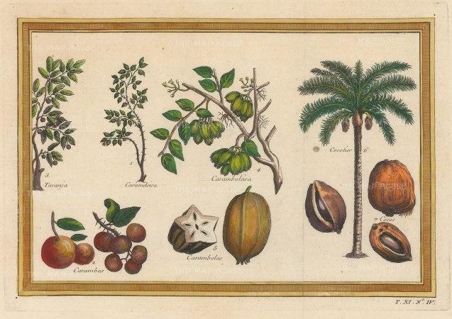 Bellin: Caramdeira, Carambas, Tranja, Caramboles and a Cocunut Tree. 1753. A hand-coloured original antique copper-engraving. 8 x 5 inches. [NATHISp7193]