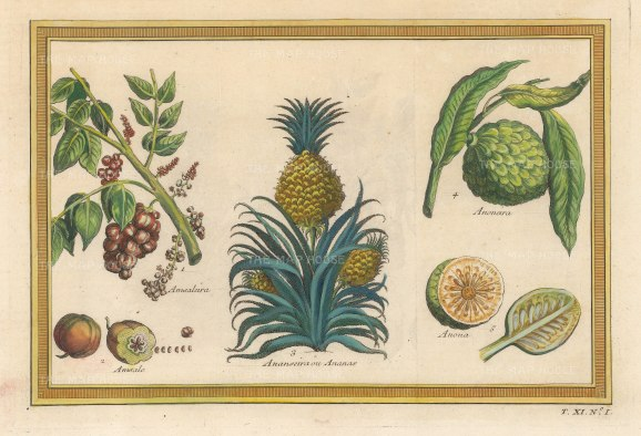 Bellin: Pineapple and fruit. 1753. A hand-coloured original antique copper-engraving. 8 x 5 inches. [NATHISp7194]