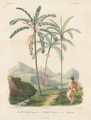 Palms (Attalea):Martinezia truncata, Euterpe andicola and Euterpe Haenkeana with Guaranins hunting with bow and arrow.