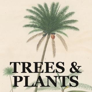 TRESS PLANTS link