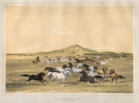 Horses at Play: Believing that neither Native Americans nor their culture could survive, Catlin set out to record their way of life before it vanished.