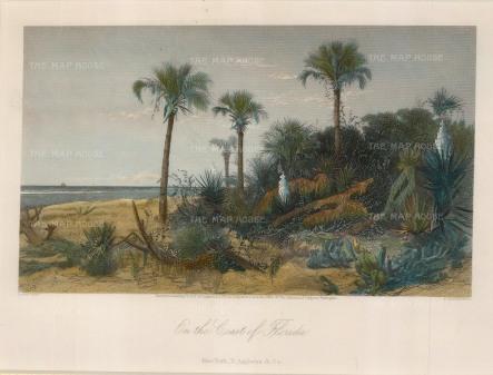 "Picturesque America: Florida. 1872. A hand coloured original antique steel engraving. 10"" x 8"". [USAp4437]"