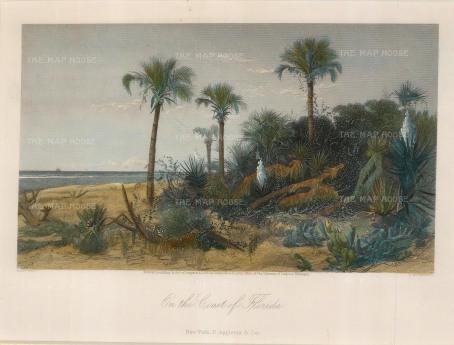 Picturesque America: Florida. 1872. [USAp4437]