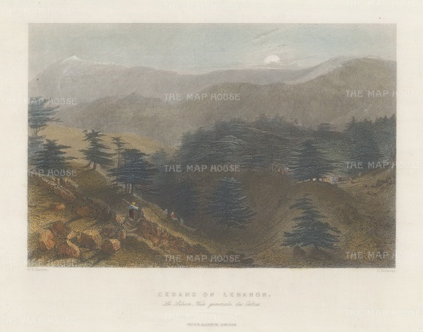 Cedars of Lebanon: View from the hill.