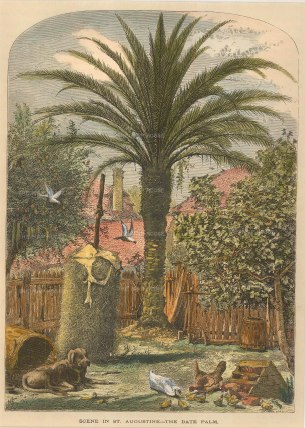 "Picturesque America: St Augustine, Florida. 1876. A hand coloured original antique wood engraving. 7"" x 10"". [USAp4810]"