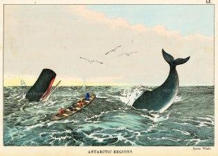 "Edmonston: Antarctic. 1862. A hand coloured original antique wood engraving. 10"" x 7"". [ANTp21]"
