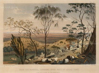 "Angas: Angas Park. 1846. An original colour antique lithograph. 13"" x 10"". [AUSp242]"