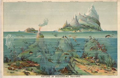 Nature in Descending Regions: 1893. Comparative chart of the World's oceans and the different species that live within them. .