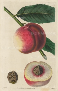 "Withers: George IV Peach. 1829. An original colour antique copper engraving. 6"" x 10"". [NATHISp5461]"