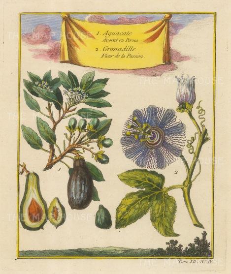 Avocado (Persea Americana) and Granadille (Passion flower).