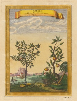 """Bellin: Goavas and Lychee (Su Ping). 1748. A hand coloured original antique copper engraving. 6"""" x 8"""". [NATHISp7133]"""