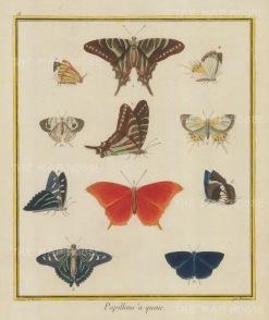 Papillons à queue - Le chapelet bleu de cayenne, l'écharpe de la Guadeloupe, La veuve, La palatine, Phaline, Phalène chauve, Souris de la chine, Le Frangiver. Plate 18: