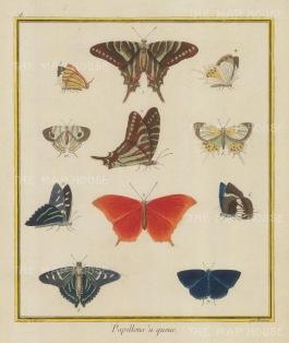 Ten varieties: Central orange species. Plate 18.