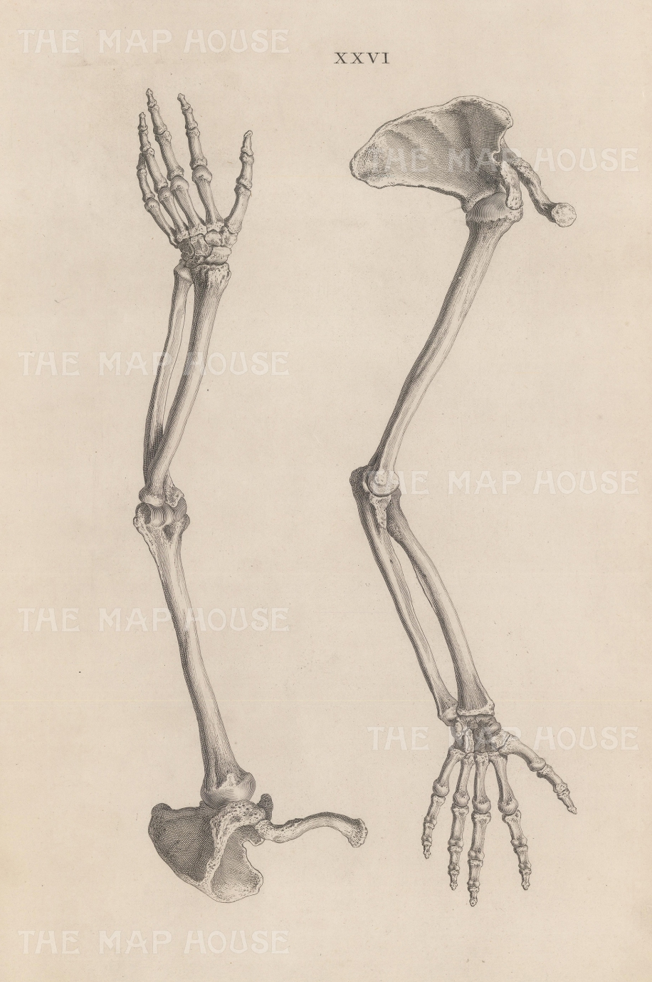 "Cheselden: Arm. 1733. An original antique copper engraving. 11"" x 17"". [NATHISp6505]"