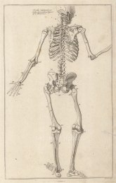 "Dr Mortherby: Gesturing Skeleton. 1775. An original antique copper engraving. 7"" x 12"". [NATHISp7293]"