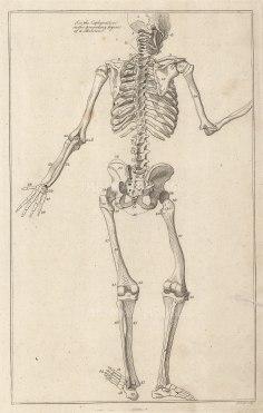 """Dr Mortherby: Gesturing Skeleton. 1775. An original antique copper engraving. 7"""" x 12"""". [NATHISp7293]"""