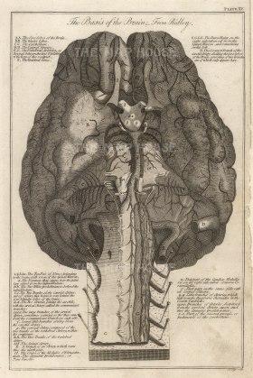 Brain: Diagram with key after the first neuroanatomist Humphrey Ridley