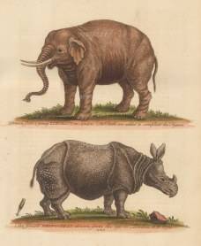 Female Rhinoceros and young elephant with tusks added by Edwards.