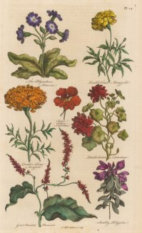 Polyanthus Primrose, French Marigold, African Marigold, Indian Nasturtium, Oriental Persisaria, Polygala.