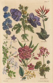 Single and Double Larkspur, Hibscus, Scarlet Conna, Jasmine, Codaga Pala, Single and Double Oleander, African Geranium.