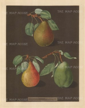 Pears: Brown Beurree, Golden Beurree and Colmar.