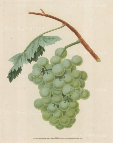 Grapes: White Sweet Water Grape.