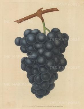 Grapes: Black Hamberg.