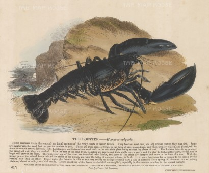 SOLD. Black lobster with descriptive text: Founded in 1698, the SPCK is the oldest Anglican mission and publishing house of the Church of England.