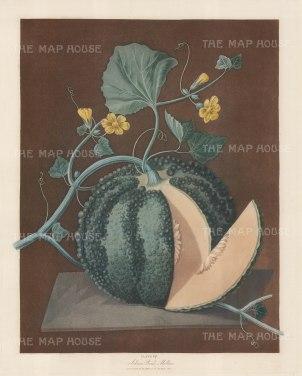 Silver Rock Melon.