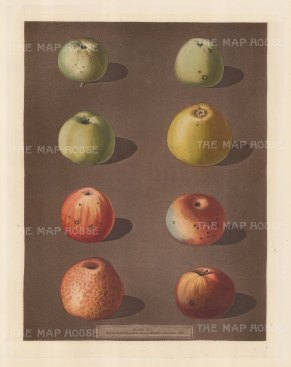 Apples: Robertson's Pippin, Blanchard's Pippin, Lemon Pippin, Aromatic Pippin and Embroidered Pippin.