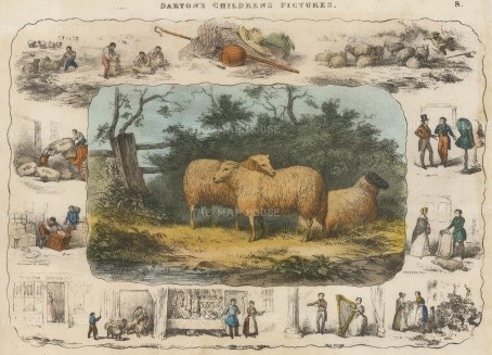 "Barfoot: Sheep. c1860. A hand coloured original antique lithograph. 13"" x 9"". [NATHISp5350]"