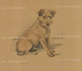 "Dawson: Wire Haired Fox Terrier. c1930. An original vintage chromolithograph. 8"" x 6"". [NATHISp6571]"