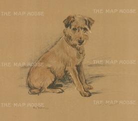 "Dawson: Wire Haired Fox Terrier. c1930. An original vintage chromolithograph. 8"" x 6"". [NATHISp6571]"