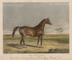 "Scott: Bay Arab. c1840. A hand coloured original antique steel engraving. 6"" x 5"". [NATHISp6949]"