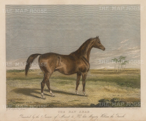 "Scott: Bay Arab. c1840. A hand coloured original antique steel engraving. 6"" x 5"". [NATHISp6949]"