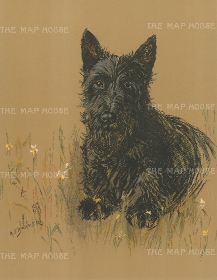 "Barker: Scottish Terrier. 1938. An original vintage chromolithograph. 8"" x 11"". [NATHISp7183]"