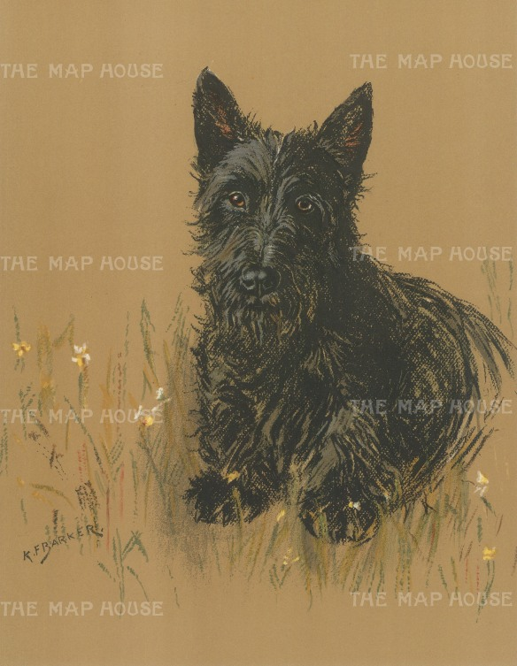 "Barker: Scottish Terrier. 1938. An original vintage chromolithograph. 8"" x 11"". [NATHISp7183]"