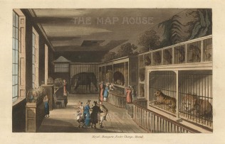 "Papworth: Royal Menagerie, Strand. 1816. An original colour antique aquatint. 8"" x 6"". [LDNp10277]"