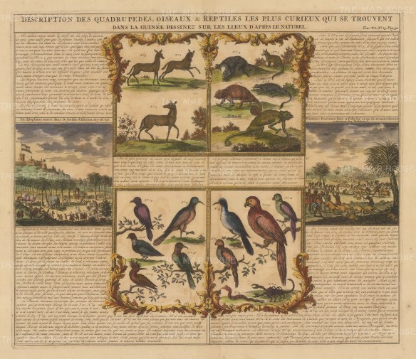 View of Elmina, a Pig Hunt, Mammals, Birds & Reptiles. Text in French.