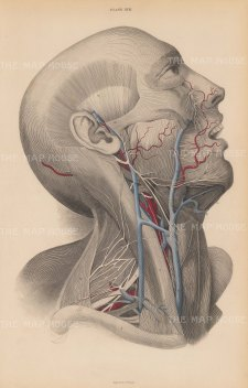 "Lizars: Head and Throat. 1840. An original colour antique steel engraving. 10"" x 17"". [NATHISp7591]"
