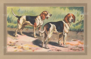 "Mahler: Beagles. c1910. An original antique chromolithograph. 10"" x 7"". [FIELDp1497]"