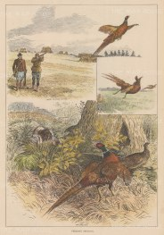 """Illustrated London News: Pheasant Shooting. 1881. A hand coloured original antique wood engraving. 9"""" x 14"""". [FIELDp1559]"""
