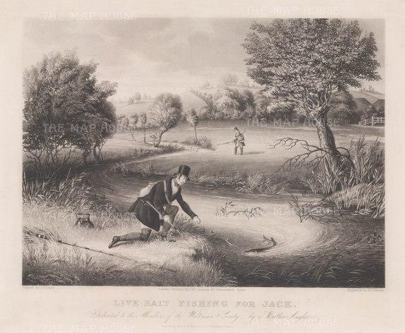 "Reeve: Pike Fishing. c1840. An original colour antique aquatint. 14"" x 12"". [FIELDp742]"