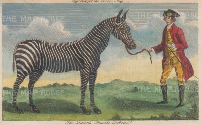 Zebra: The first zebra in England was brought from Cape of Good Hope aboard the HMS Terpsichore as a gift to Queen Charlotte and kept at Buckingham House menagerie.