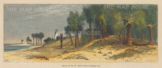 "Picturesque America: St John's River, Florida. c1876. A hand coloured original antique wood engraving. 10"" x 14"". [USAp4594]"