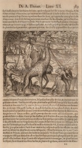 Giraffe: Two men leading it by a halter. Not seen in Europe since the time of Julius Caesar, a giraffe was presented to Cosimo dei Medici in 1485; another would not be seen until the mid 19th century. With text in French.